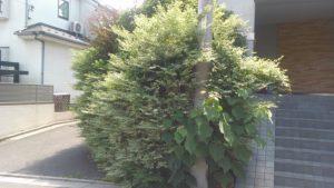 サニー永福 植栽伐採終了